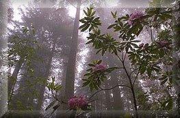 Woods_flowers